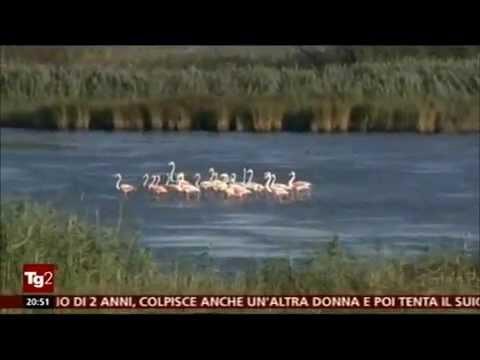 Report TG2 Parco regionale naturale Saline di Punta della Contessa