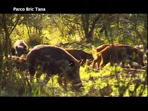 Parco Naturale Regionale BricTana e Piana Crixia