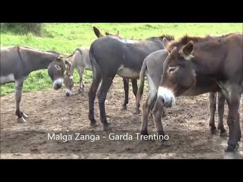 Malga Zanga sul Lago di Garda - Garda Trentino