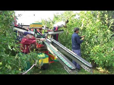 Azienda Agricola La Quadra a Drena: la macchina che raccoglie le mele