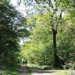 Parco naturale Bosco delle Sorti della Partecipanza di Trino