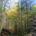 Foreste Casentinesi Monte Falterona E Campigna
