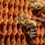 MMape • Mulino Museo dell'ape