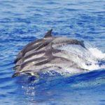 Andiamo a Genova a caccia (fotografica) di delfini e balene