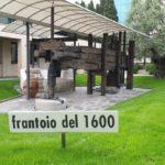 Museo dell'olivo Carli