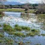 Giornata mondiale delle zone umide e della biodiversita'