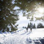 Il dolce inverno di Merano