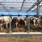 La prima fattoria galleggiante del mondo accoglie le sue mucche!