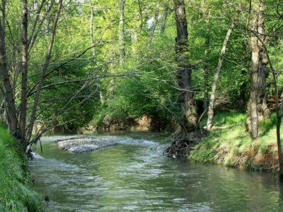Parco naturale Pineta di Appiano Gentile e Tradate