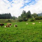 Sulla ciclabile Dobbiaco-Lienz, 45 km di natura
