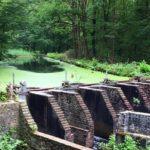 Parco naturale foresta Waterloopbos in Olanda