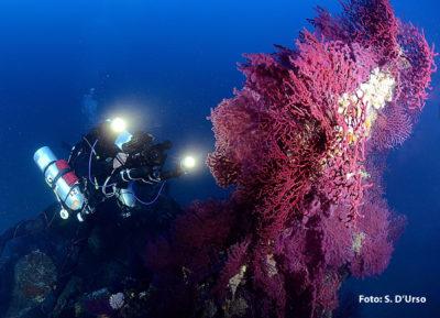 Diving Club Scuba Point