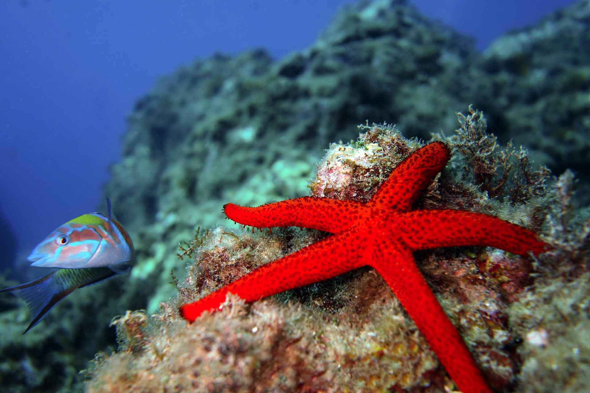 blue-diving-ustica
