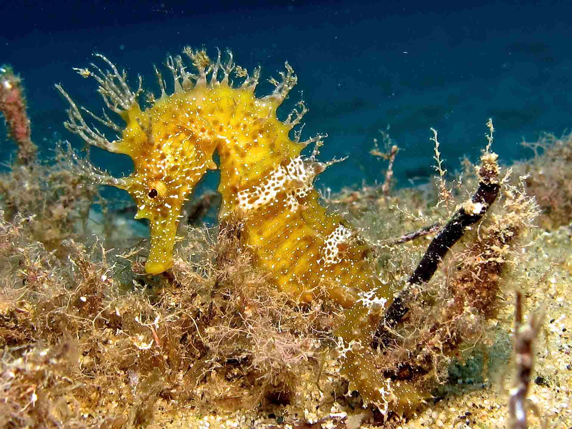 diving-club-biodola