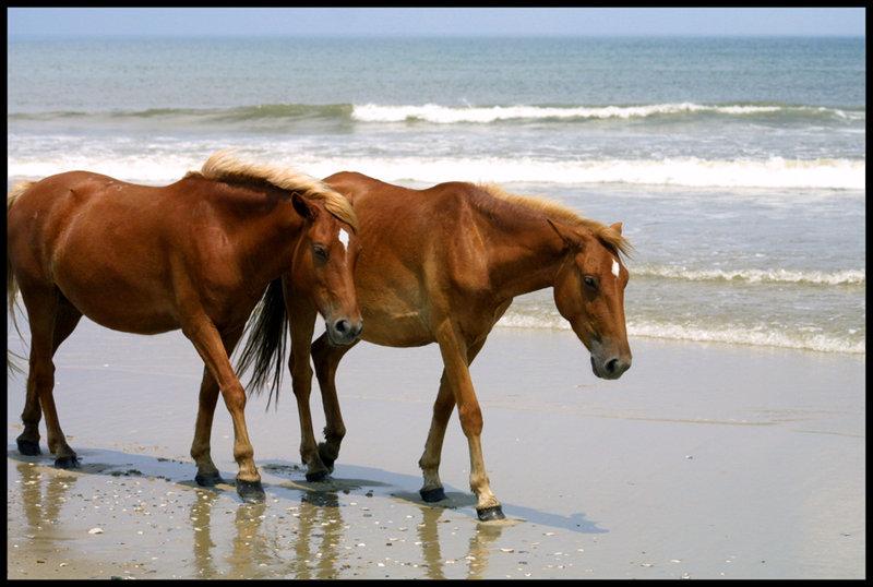 fattoria-amici-cavalli