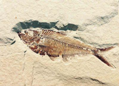 Museo dei fossili di Bolca, Vestenanova