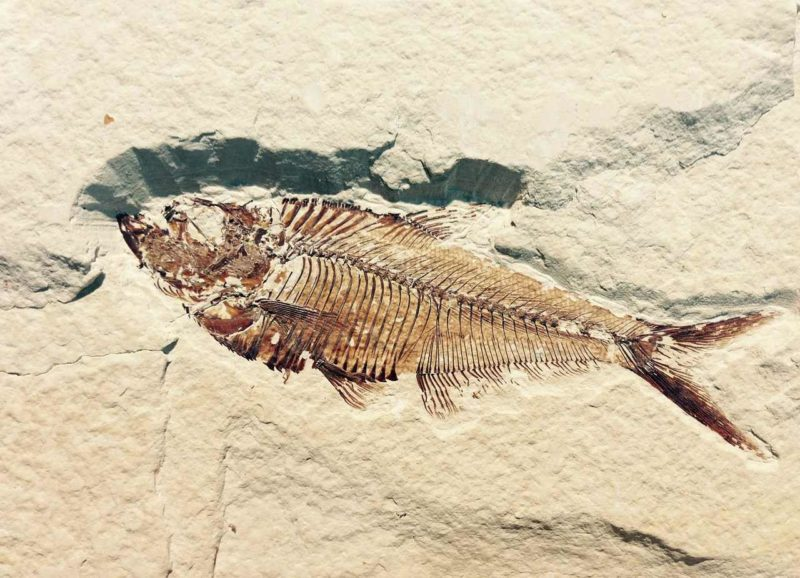 museo-fossili-bolca-vestenanova